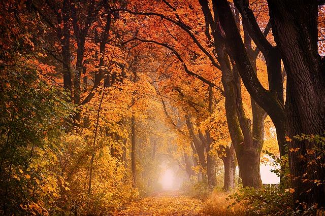 tree-3110117_640