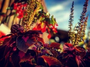 Sommer/Herbst